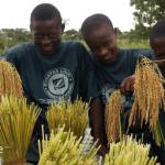 Sénégal: Un centre de formation aux métiers rizicoles