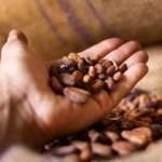 Côte d'Ivoire: Des mesures fiscales annoncées pour accélérer la transformation des fèves de cacao