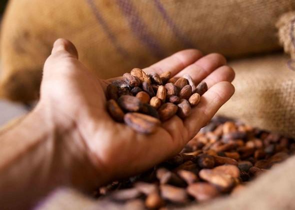 documents-camille-bloch-les-feves-de-cacao