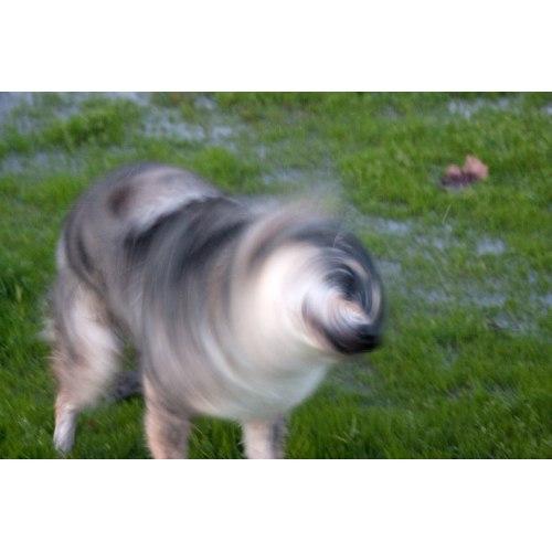 Medium Crop Of Dog Keeps Shaking Head