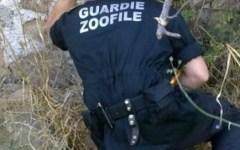 Le Guardie zoofile cercano volontari in Valdarno