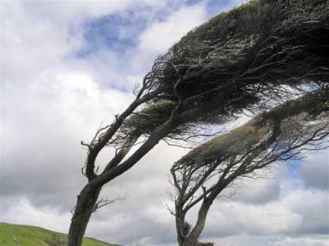 Da lunedì allerta a Firenze per le raffiche di vento