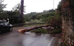 Toscana: vento devastante e forti mareggiate. Alberi sradicati, bloccati strade e alcuni treni. Feriti. Scuole chiuse a Prato, Pistoia e in ...
