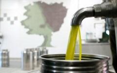 Olio toscano, 17 milioni di bottiglie e spinta per l'occupazione