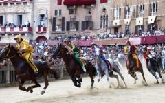 Palio di Siena, infortunio al cavallo della Giraffa