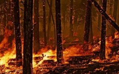 Camaiore: violento incendio nel bosco sul monte Moneta. Al lavoro elicotteri, un Canadair e squadre di volontari