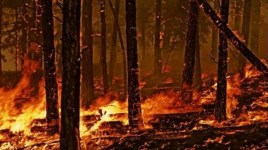 incendio boschivo 2