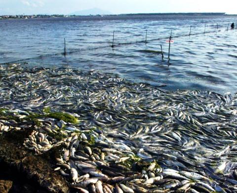Morìa di pesci a Orbetello