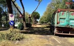 Nubifragio a Firenze, cimitero di alberi in Lungarno Colombo. Danni per 1 milione di euro alle aziende agricole