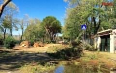 Allarme maltempo a Firenze: dalle campane di Pier Capponi agli sms (mancati) di Dario Nardella