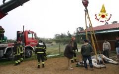 Livorno, cavallo bloccato a terra: salvato con l'autogru dei vigili del fuoco