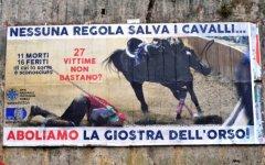 Pistoia, manifesto degli animalisti contro la Giostra dell'Orso