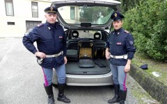 Toscana, Polizia stradale: scorta eccezionale da Careggi alle Scotte di Siena per un cuore da trapiantare. Arrestato un uomo con 70 grammi d...