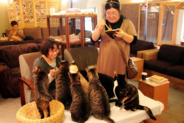 Clienti beate fra i gatti in un Neko Café di Tokio