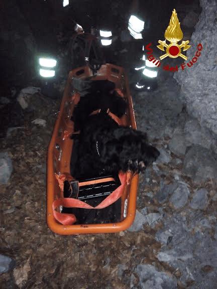 Il cane stabilizzato dai vigili del fuoco dopo il salvataggio