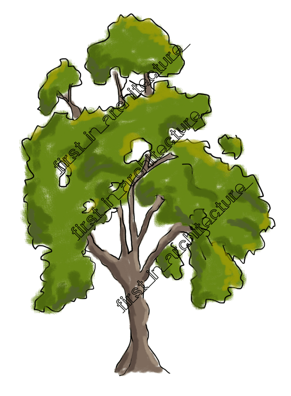 FIA Trees Elevation 02