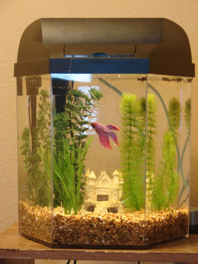 5 gallon fish tank for betta gallon heavily planted