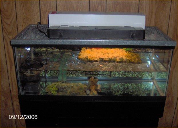 Turtle tank near window turtle tanks 2017 fish tank for Fish tank turtles