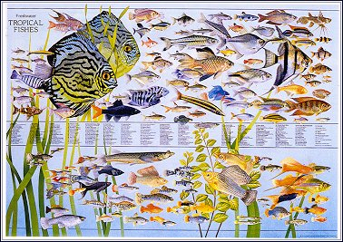 Freshwater Tropical Fishes