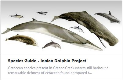 Species Guide - Ionian Dolphin Project