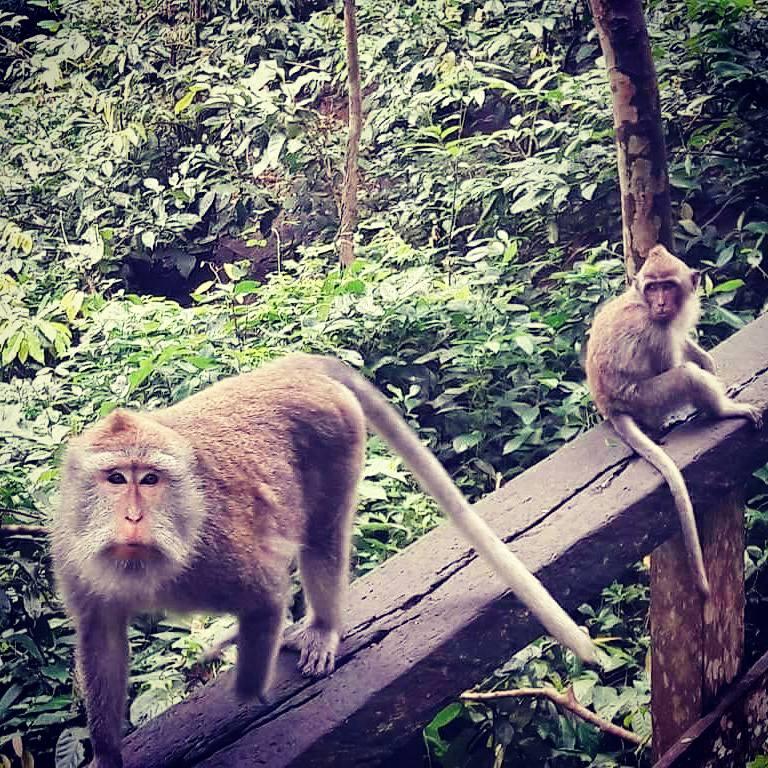 Ubud Bali Monkey Forest 2