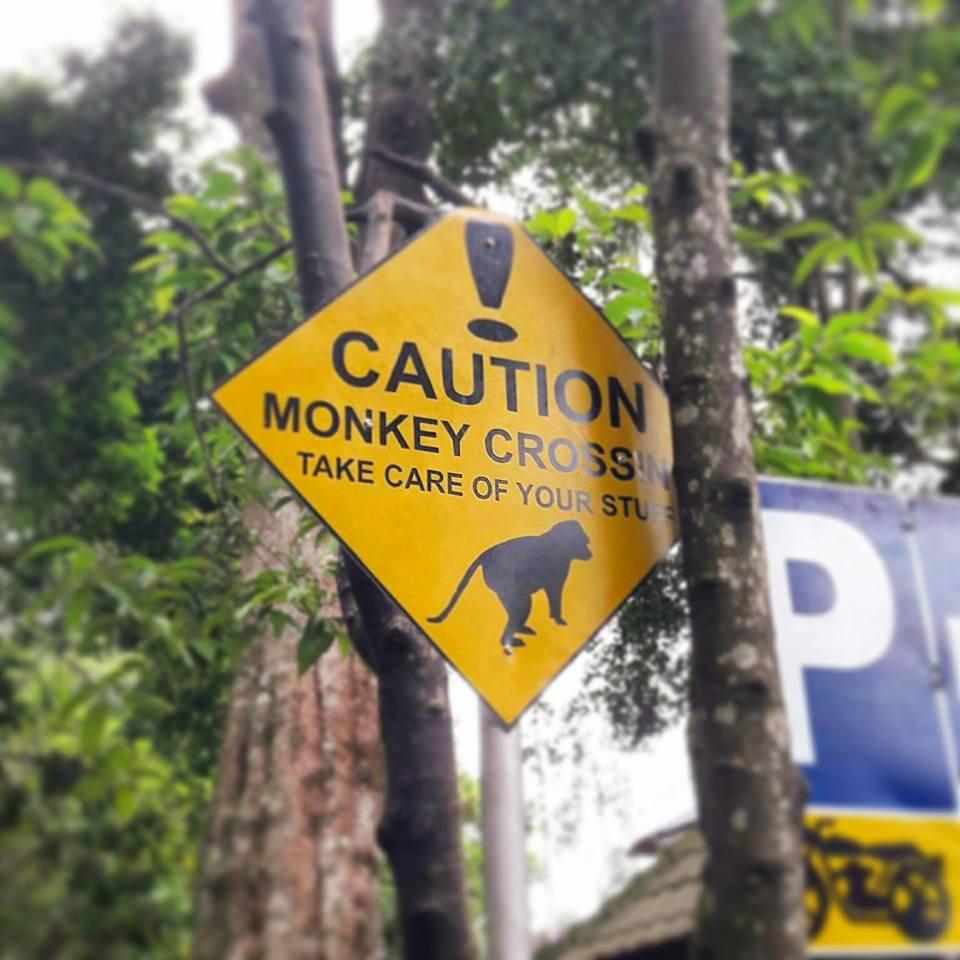 Ubud Bali Monkey Forest 3
