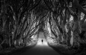 The Dark Hedges of Northern Ireland
