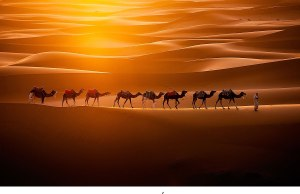 Camels Crossing theSahara