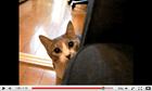 Stalking Cat (*12,621,739)