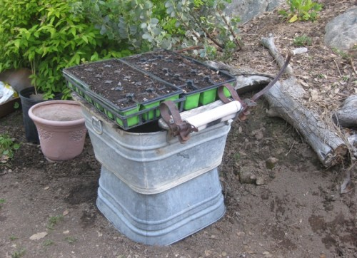 During all this, was found, a home for my seedling trays, possibly