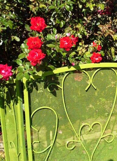 Billie Hayman my heart fireplace screen❤with my knockout roses!
