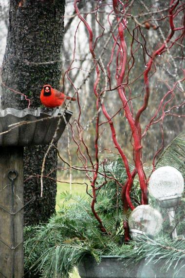 "Jeanne Sammons says, ""I'm getting a little snow this morning and the birds love it at the porch gardens feeder! Bluejays, Cardinals and Woodpecker keep coming to eat at this recycled feed pan! The branches are Corkscrew Willow spray-painted red and piney and my solar lights stuck in the galvanized washtub."""
