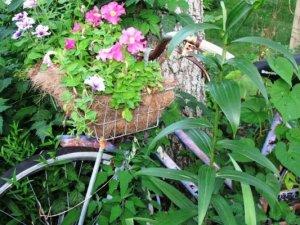 Audrey Osborn's pretty petunias