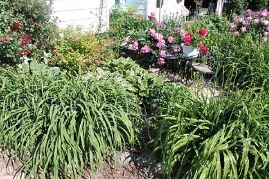 Jean's Bisro garden,...finished!