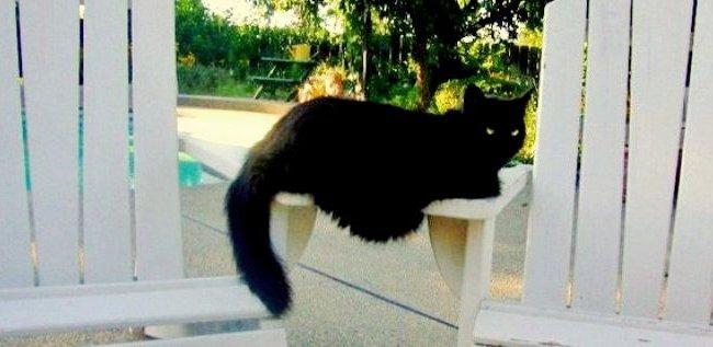 Jane's cat, Squirrelly.