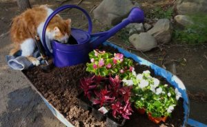 Add a bit of fertilizer to your watering can...