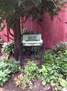 Sink birdbath under the trumpet vine