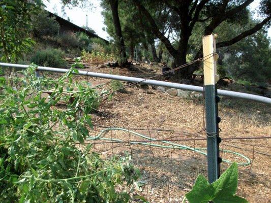 Sagging trellis wire