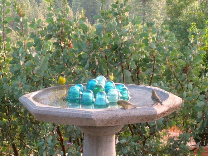 Easy steps to a clean birdbath