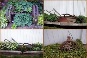 Nancy's family plow contrasts nicely with the Hosta