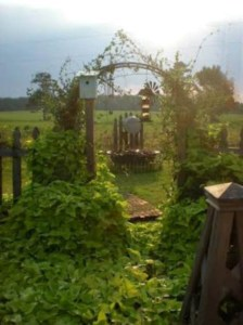 Dreamy garden archway
