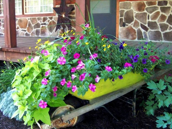 I love the way Michele Orwig's wheelbarrow is painted a yellow green to match the yellow flowers and vibrant potato vine.