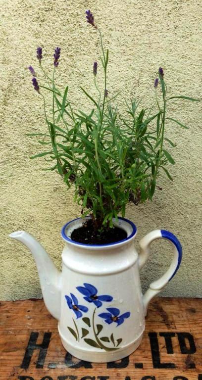 Lavender coffee pot