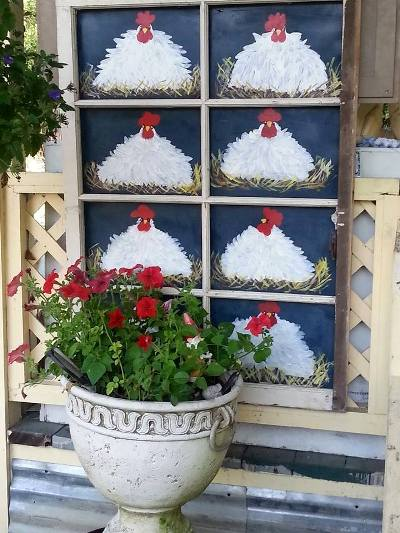 Kelly Dickinson's chickens make us smile