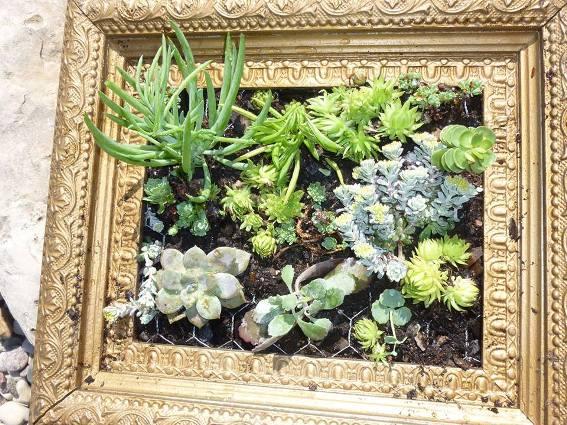 Kathy Schumacher's amazing succulent frame