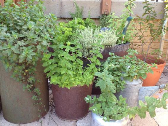 Plants to plant around the arbor