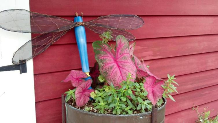 Becky Fosbrink's net-winged dragonfly