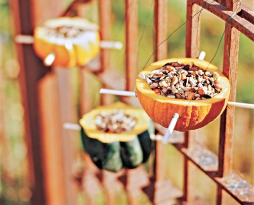 Hang bird seed in squash left from holiday decor