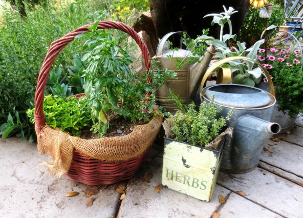 Finished herb garden in a handy basket