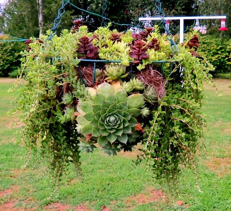 Patricia Ware's hanging wire basket